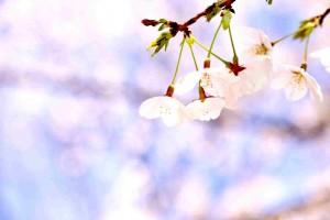 2016年4月~愛(みなもと)のメッセージ