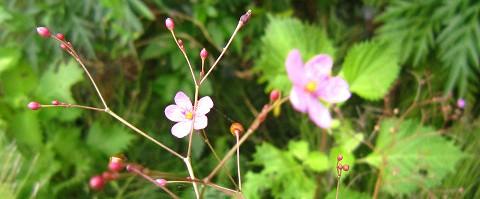 小さな花にも愛の不思議