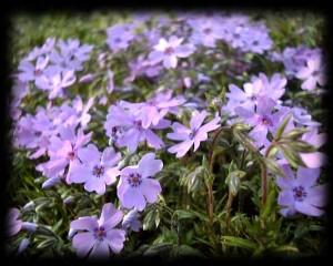 みんな笑顔の花咲く明るい夢を叶えよう