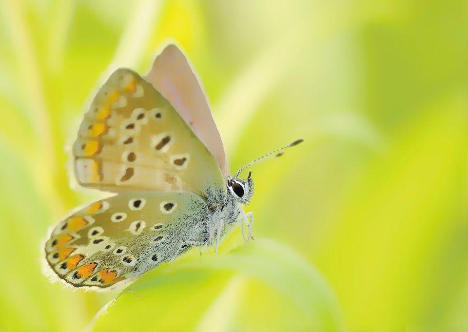 人も蛹から蝶へ