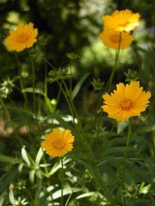 笑顔の花はどんどん広がる