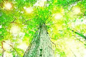 ひとつとは一本の木。光(愛)を受けて堂々と立つ。