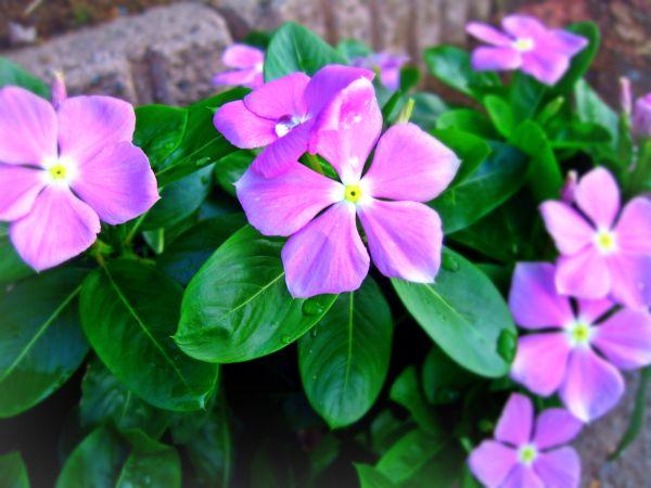 笑いを生きる花
