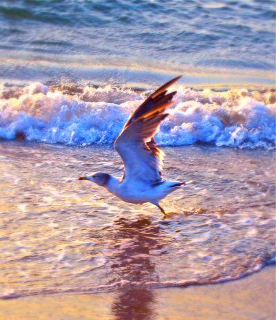源として生きるために飛び立つ命