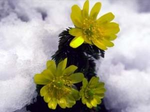 雪のように源の愛は温かく成長を見守っています