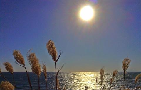 太陽に煌めく相模湾とススキ