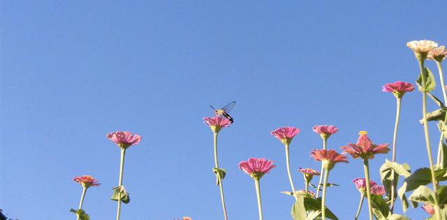 花と蜂は気が合う